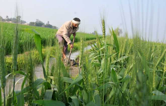 Over 7 crore farmers benefitted under PM-KISAN scheme: Govt